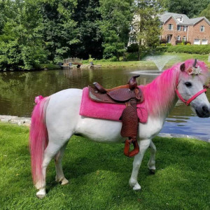 Aly's Ponies & Traveling Barnyard - Pony Party / Petting Zoo in Poughkeepsie, New York