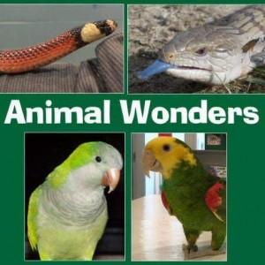 Animal Wonders, LLC - Reptile Show / Educational Entertainment in Kansas City, Missouri