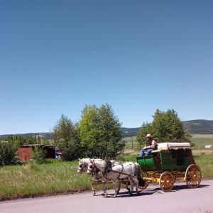Arizona Horse Carriage-Wagon & Teams - Horse Drawn Carriage in Phoenix, Arizona