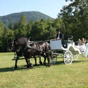 Back In Time - Horse-Drawn Carriages