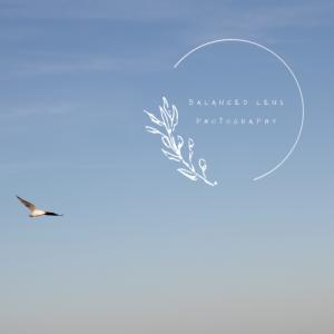 Balanced Lens Photography - Photographer in Midland, Michigan