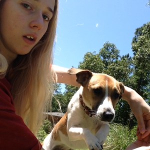 Caesar the Amazing Jack Russell Terrier - Animal Entertainment in Semmes, Alabama