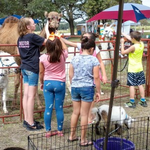 Carriages Camels and Critters LLC - Petting Zoo in Hallettsville, Texas