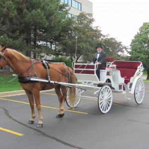 Candlelight Horse and Carriage LLC - Horse Drawn Carriage in Yorkville, Illinois