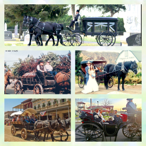 Cantrell's Mule Barn Carriage & Wagon Service - Horse Drawn Carriage in Silver Springs, Nevada