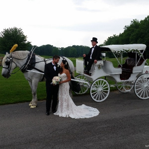 Carriage Limousine Service - Horse Drawn Carriages - Horse Drawn Carriage in Wellsville, Ohio