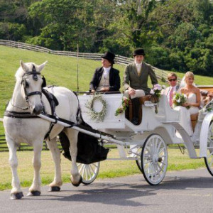 Carriages of the Capital - Horse Drawn Carriage in Frederick, Maryland