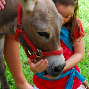 Critter  Caravan - Petting Zoo in Jacksonville, Florida