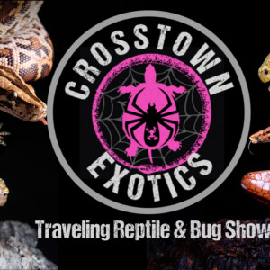Crosstown Exotics