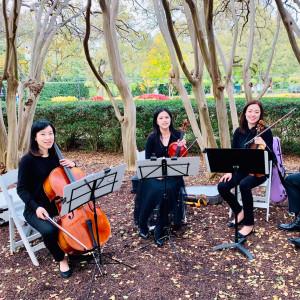 Dallas Asian Strings - String Quartet in McKinney, Texas