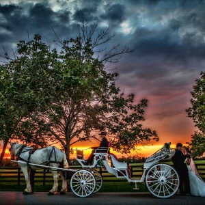 Destiny Horse and Carriage - Horse Drawn Carriage in Ocala, Florida