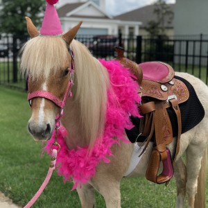 Divinity Stables - Pony Party / Children's Party Entertainment in Spring Hill, Florida