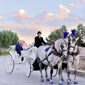 Dream Catchers Carriages - Horse Drawn Carriage / Animal Entertainment in Bloomington, California
