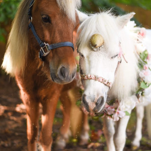 Enchanted Pony Parties - Children's Party Entertainment in Archdale, North Carolina