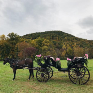Valley View Horse & Carriage - Horse Drawn Carriage / Children's Party Entertainment in Sevierville, Tennessee