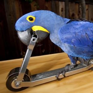 Happy Birds Performing Parrot Show - Animal Entertainment / Children's Party Entertainment in San Martin, California