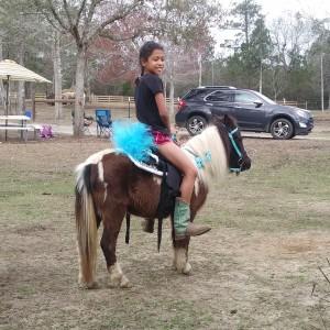 Heavenly Grace Farm - Pony Party / Petting Zoo in Kiln, Mississippi