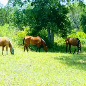 Horse therapy - Country Band in San Antonio, Texas
