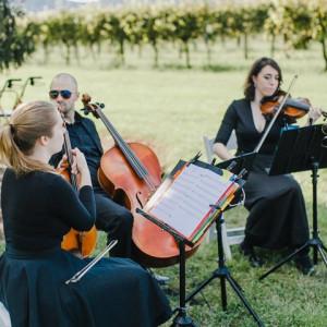 Melodious Strings Quartet - String Quartet in Woodbridge, Virginia
