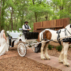 Moonlit Acre Carriage Rides - Horse Drawn Carriage / Chauffeur in De Leon Springs, Florida
