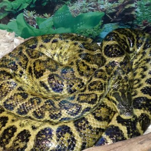 All Things Reptile - Reptile Show / Animal Entertainment in Fulton, Missouri