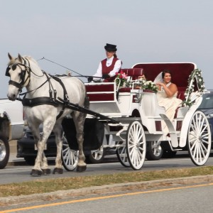 New Deal Horse & Carriage - Horse Drawn Carriage in Saunderstown, Rhode Island