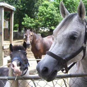 Noah's Landing Petting Zoo & Pony Rides - Petting Zoo in Daytona Beach, Florida