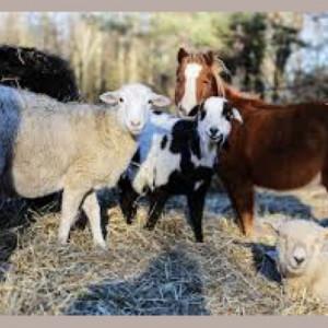 Peaceable Kingdom Petting Zoo - Petting Zoo in Quakertown, Pennsylvania