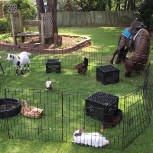 Johnson Family Petting Farm - Petting Zoo in Copperas Cove, Texas