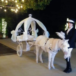 Platinum Carriage Co. & Pony Parties - Animal Entertainment in Conroe, Texas