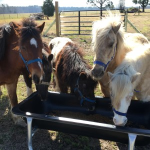 Pony Rides, Petting Animals, Moonwalks by JM Farms - Pony Party / Children's Party Entertainment in Chesapeake, Virginia
