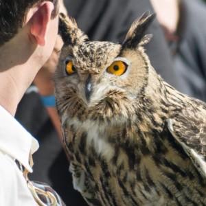 Raptor Events - Animal Entertainment in Long Beach, California