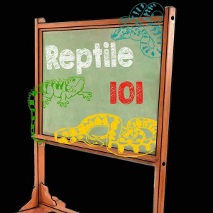 Reptile 101 - Animal Entertainment / Petting Zoo in Charlotte, North Carolina