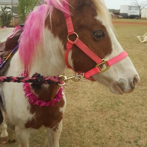 RJ Ponies and Parties - Pony Party in Choctaw, Oklahoma