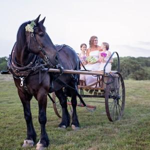 Sonnyside Rides Martha's Vineyard Horse & Carriage - Horse Drawn Carriage in West Tisbury, Massachusetts