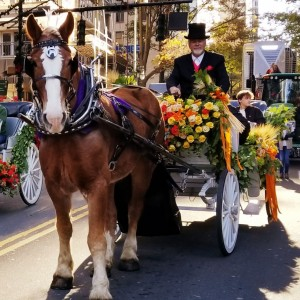 Southern Breezes Carriages - Horse Drawn Carriage / Holiday Party Entertainment in Charlotte, North Carolina