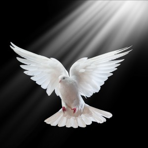 St Louis Doves Release Company - Animal Entertainment in St Louis, Missouri