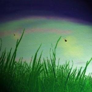 Tall Grass Emporium
