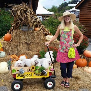 The Magical Poodles - Animal Entertainment / Children's Party Entertainment in Gulf Breeze, Florida
