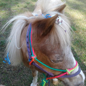 Trick Pony Parties - Pony Party in Fort Myers, Florida