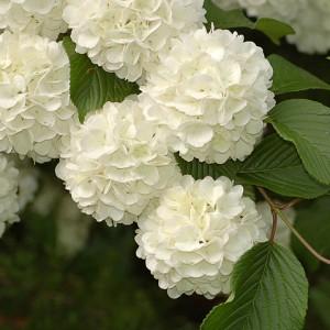 Viburnum Designs - Event Florist in Princeton, New Jersey
