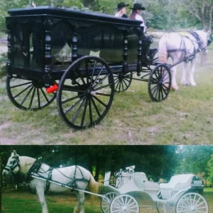 Wedding Carriage and Funeral Hearse - Horse Drawn Carriage / Civil War Reenactment in Longview, Texas