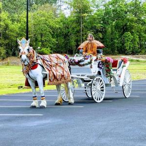 Wedding Carriages - Horse Drawn Carriage / Animal Entertainment in Savannah, Georgia