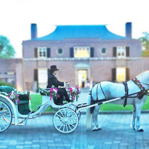 Diana's Wedding Horses - Horse Drawn Carriage / Holiday Party Entertainment in Mount Airy, Maryland