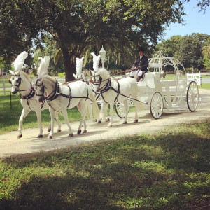 Wind Chase Farm Horse & Carriage
